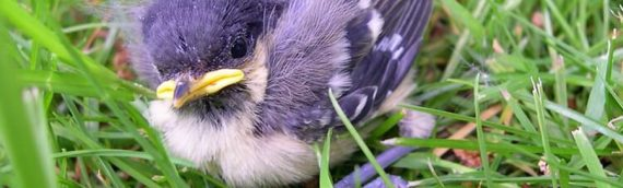What to do When You Find a Baby Bird