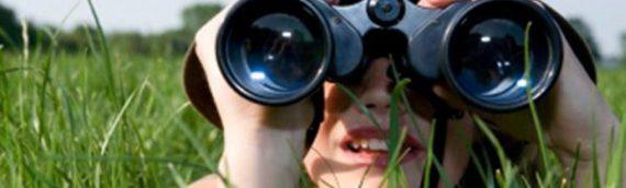 What is the Best Strength Binoculars for Birding