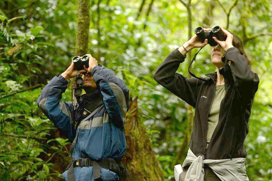 What Makes for Good Birding Binoculars