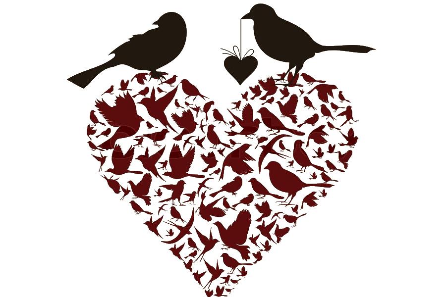 The Top 5 Benefits of Bird Watching and Birding